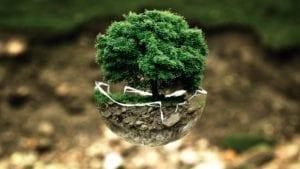 environmental ethics is wildcat tree service company's priority