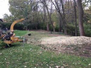 wildcat creek tree service of lafayette IN will take the time to remove brush and all the extra tree material from your property