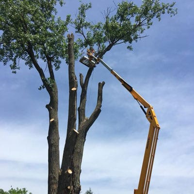 wildcat-tree-removal