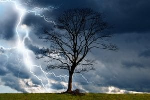 protect your yard from damage with wildcat creek tree service