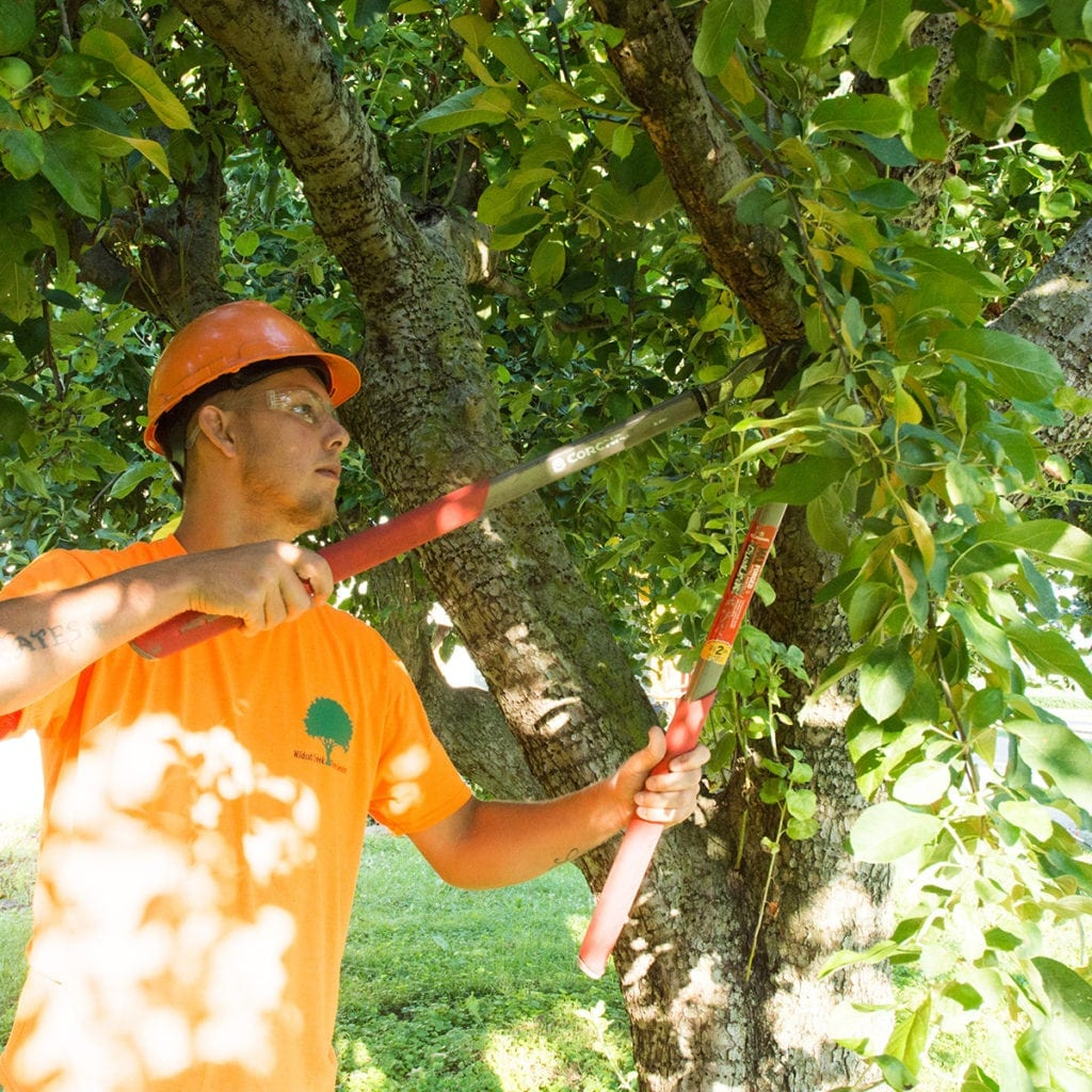 wildcat creek tree service in lafayette indiana provides proper pruning techniques