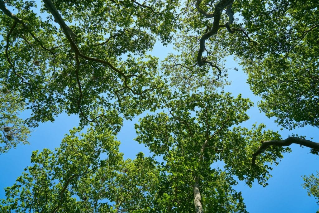 let wildcat creek tree service in lafayette indiana thin your trees to make them healthier