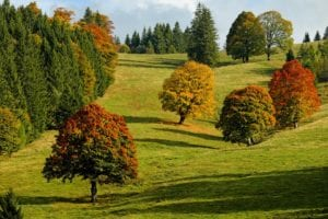 protect your trees this fall with wildcat creek tree service in lafayette indiana