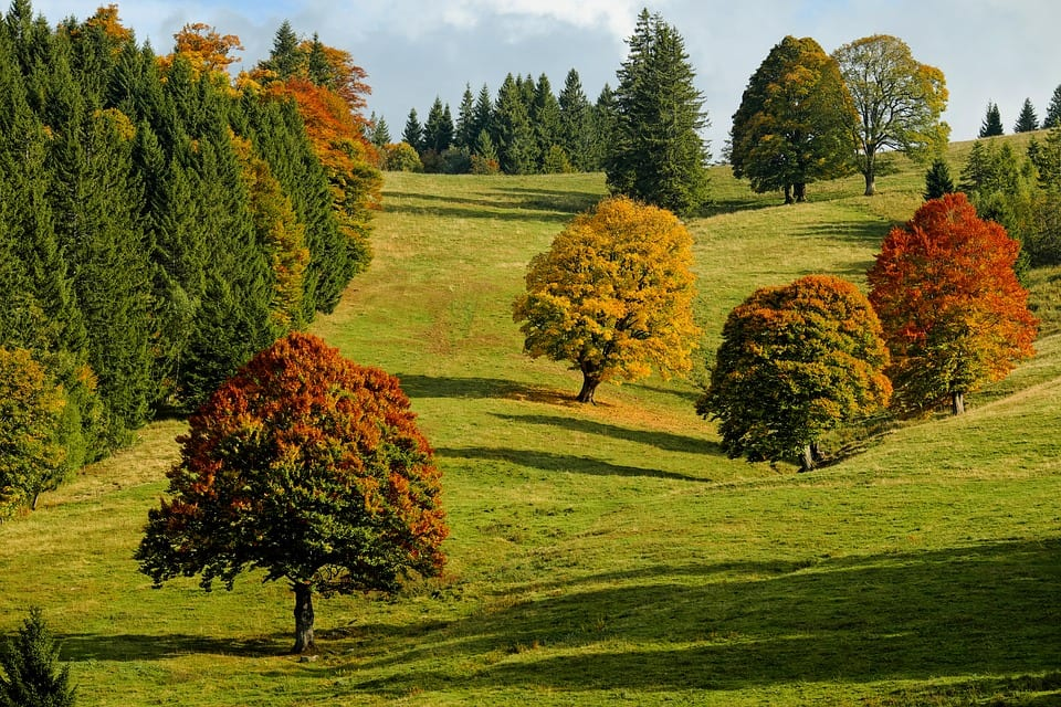 care for your trees with expert tree service in lafayette indiana