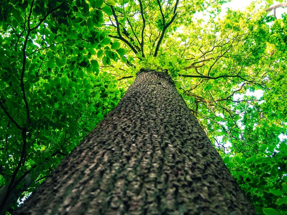 for assistance with your tree care contact wildcat creek tree service in lafayette indiana