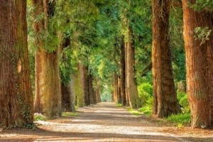 wildcat creek tree service in lafayette indiana can help you choose which trees to plant in your yard