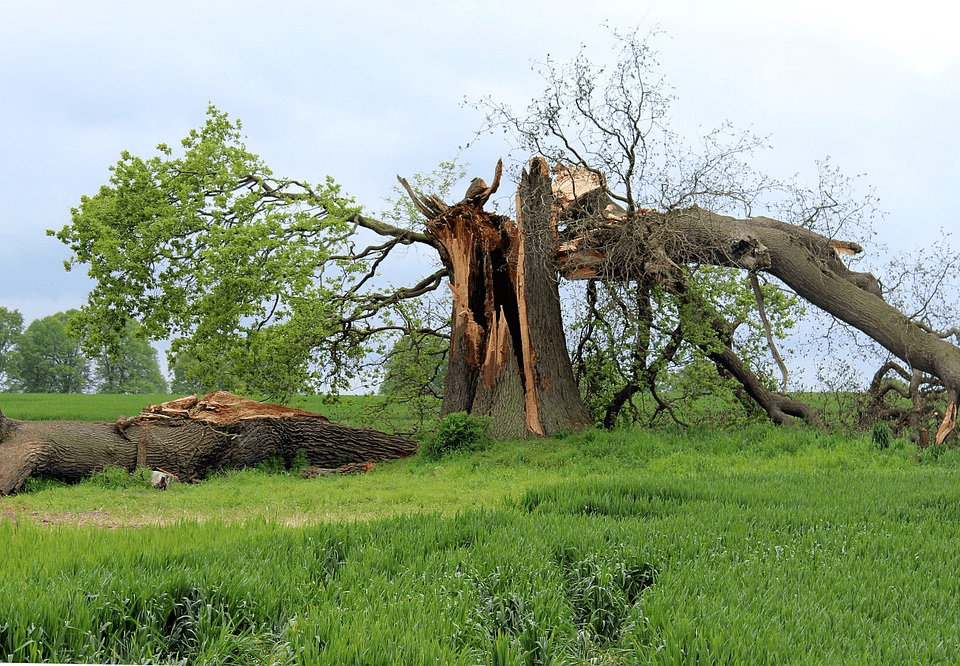 keep your yard free from debris with wildcat creek tree service in lafayette indiana