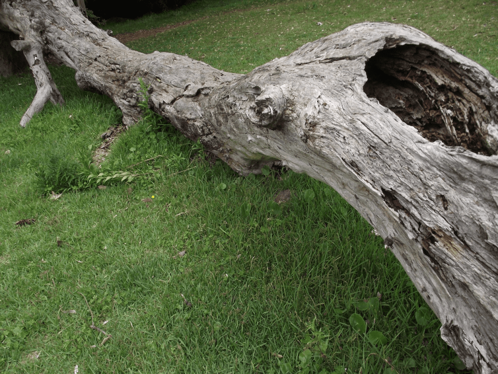 get expert storm damage removal in lafayette indiana with wildcat creek tree service