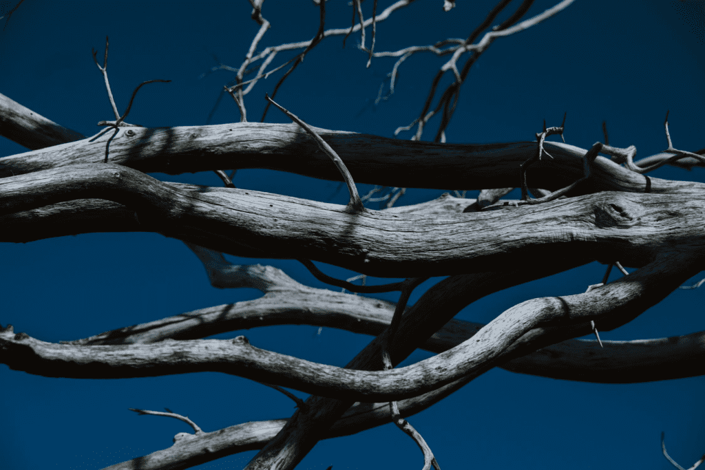 deadwooding your tree in lafayette indiana can improve your trees health