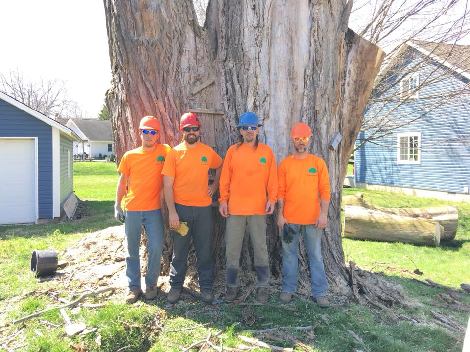 contact wildcat creek tree service in lafayette indiana for the best tree care