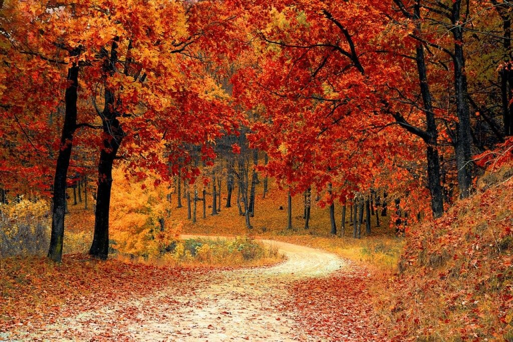 prepare your trees for the winter with wildcat creek tree service in lafayette indiana