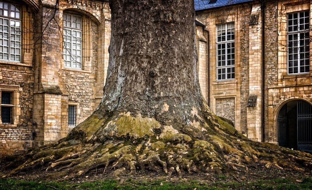 call wildcat creek tree service for tips on caring for your trees roots
