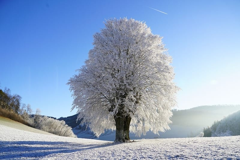 care for your trees in the winter with wildcat creek tree service